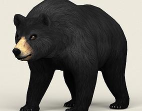 Realistic Low Poly Black Bear 3D asset