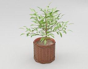 Green Plant in Ceramic Pot 3D model